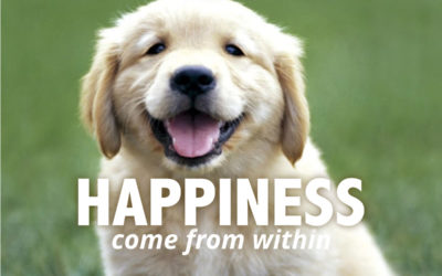Is Happiness an Inside Job?