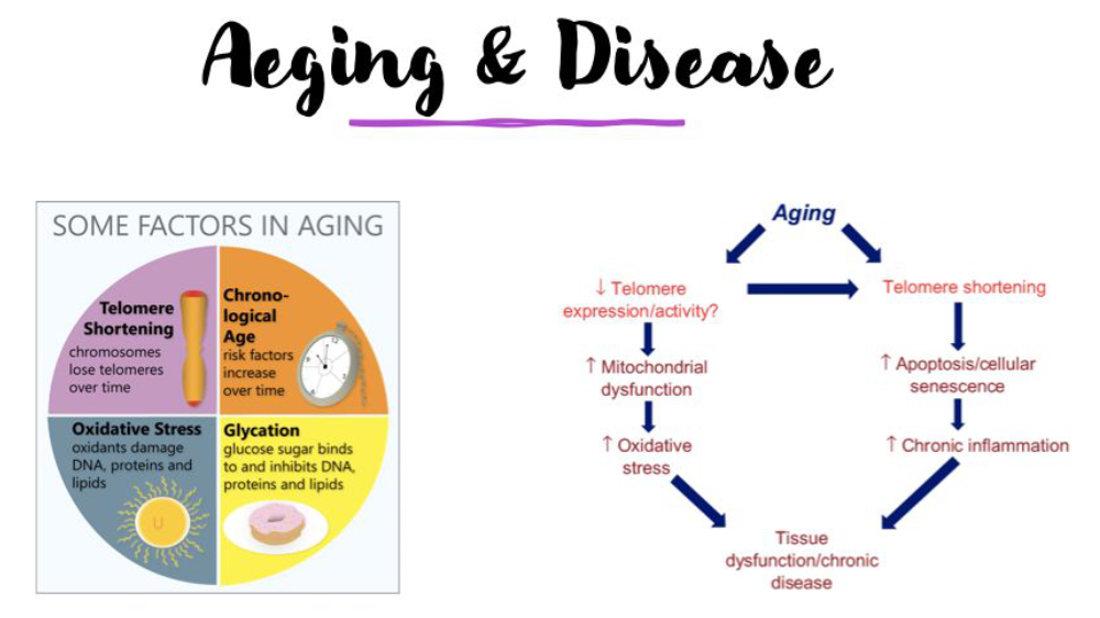 ageing and disease