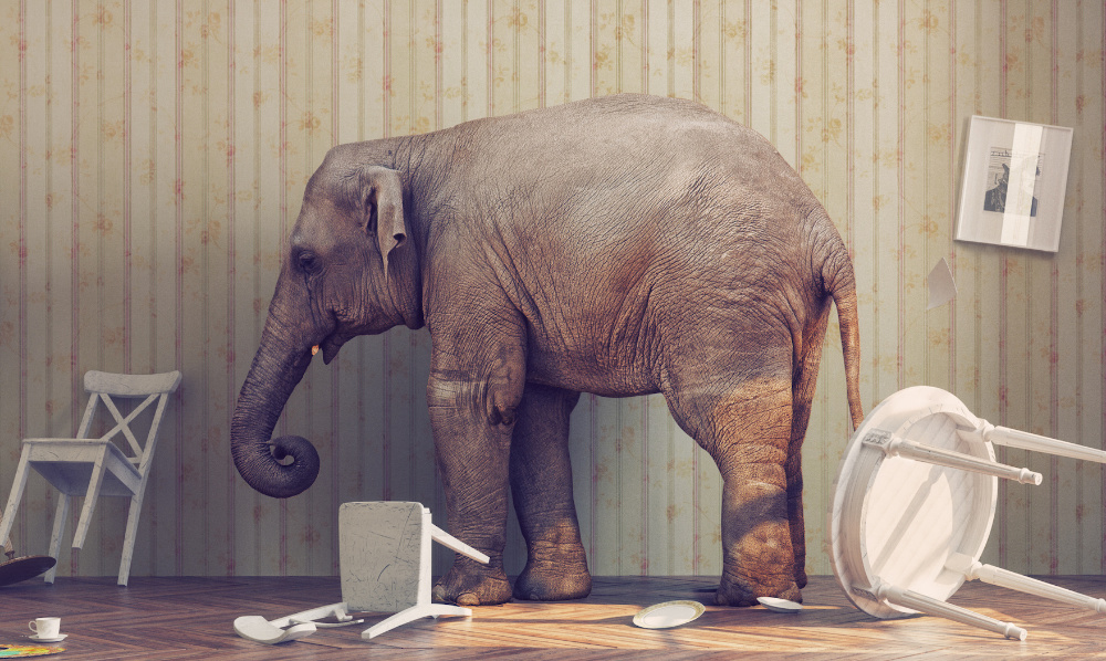 elephant in the room cannot ignore